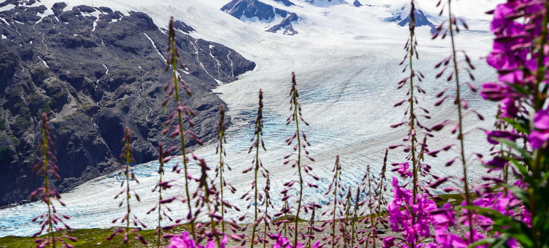 lodowiec-exit-alaska