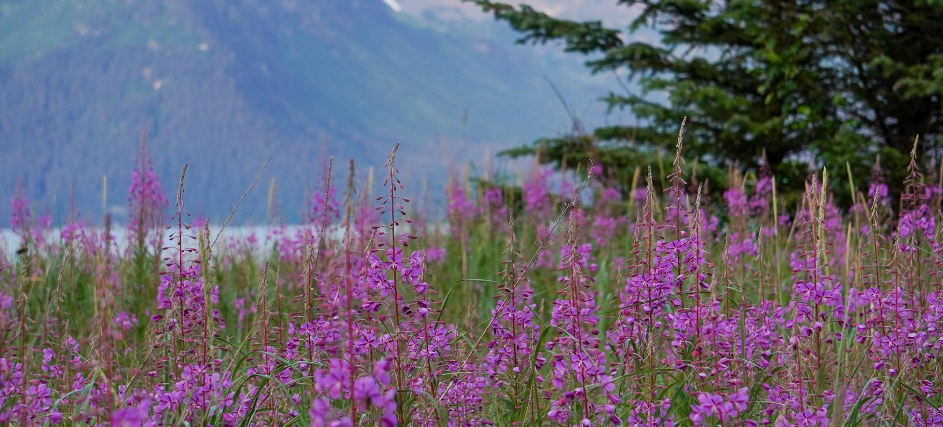 seward-alaska-wycieczka