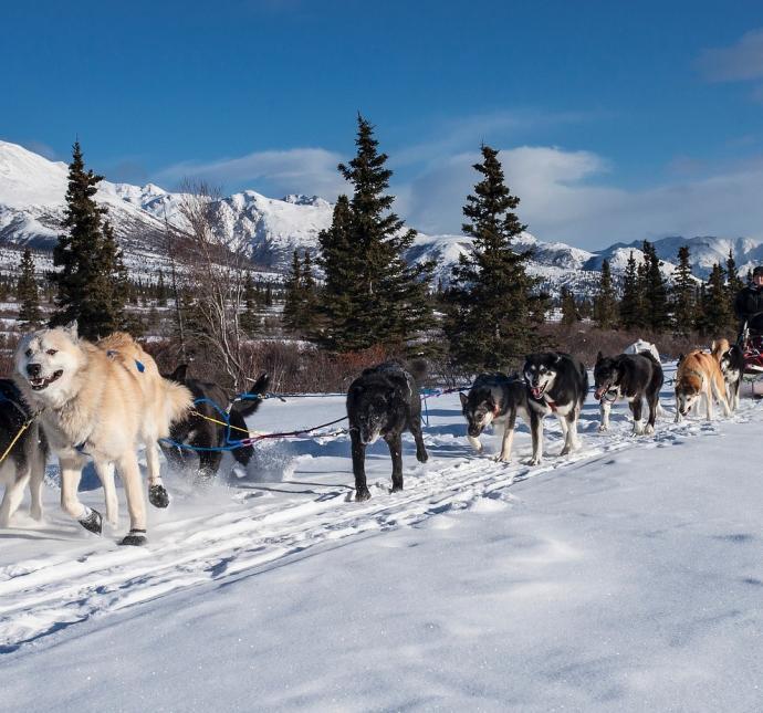 alaska-zima-zaprzęgi