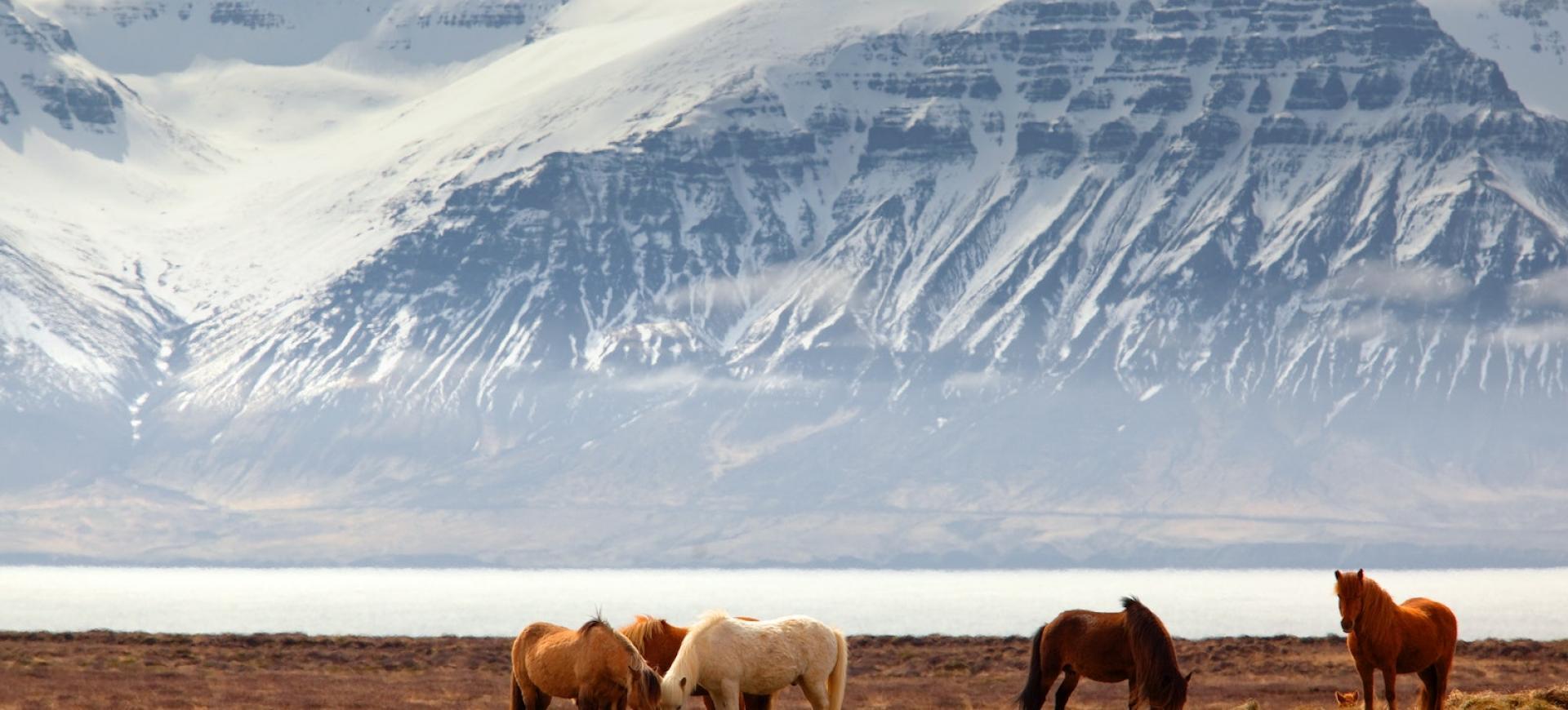wycieczki-islandia